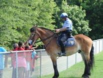 Police officer on horse